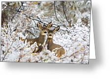Winter Pair Greeting Card