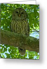 Winter Park Owl Greeting Card