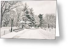 Winter Path - Snow Covered Trees In Central Park Greeting Card by Vivienne Gucwa