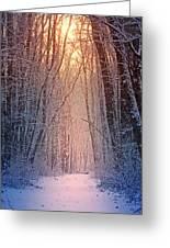 Winter Pathway Greeting Card