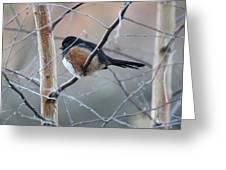 Winter Perch Greeting Card