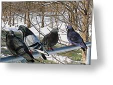 Winter Pigeon Party Greeting Card