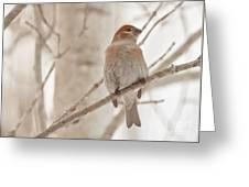 Winter Pine Grosbeak Greeting Card