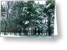 Winter Pine Tree  Greeting Card