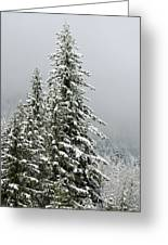 Winter Pines 2013 Greeting Card