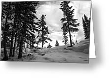 Winter Pines Silhouetted Against The Sky Greeting Card