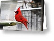 Winter Red Bird Greeting Card
