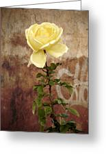 Winter Rose Greeting Card