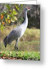 Winter Sandhill Crane Greeting Card