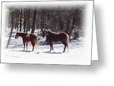 Winter Shadow Horses Greeting Card