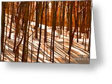 Winter Shadows Greeting Card
