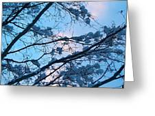 Winter Sky And Snowy Japanese Maple Greeting Card