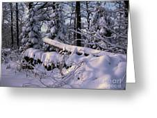 Winter Solemn Greeting Card