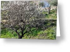 Winter Spanish Nature Almeria Region  Greeting Card
