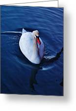 Winter Spin... Swan Style Greeting Card