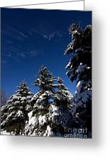 Winter Spruce Greeting Card by Steven Valkenberg