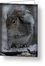 Winter Squirrel 1 Greeting Card