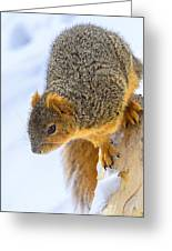 Winter Squirrel Greeting Card