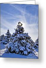 Winter Starburst - D008347 Greeting Card