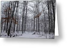 Winter Storm In The Forest Greeting Card
