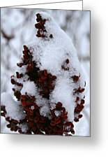 Winter Sumac Greeting Card
