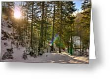 Winter Sun Flares Greeting Card