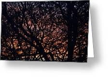 Winter Sunset Silhouette Greeting Card