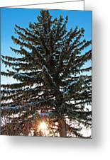 Winter Sunset Greeting Card by Stephanie Grooms