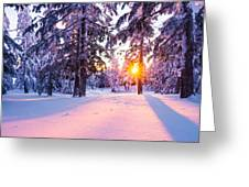 Winter Sunset Through Trees Greeting Card by Priya Ghose