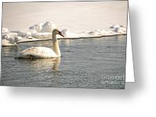 Winter Swan Greeting Card