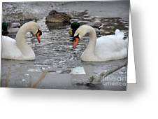 Winter Swans  Greeting Card