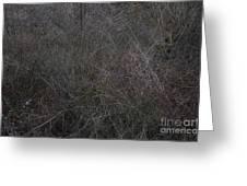Winter Tangle Greeting Card