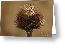 Winter Thistle Greeting Card