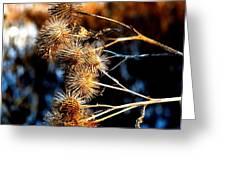 Winter Thistles  Greeting Card