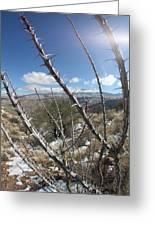 Winter Thorns Greeting Card