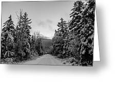 Winter Trail Through Trees Greeting Card