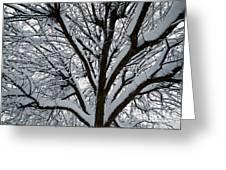 Winter Tree 1 Greeting Card