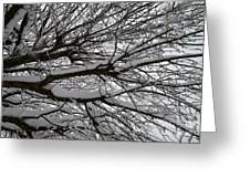 Winter Tree 3 Greeting Card