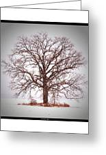 Winter Tree 8x10 Crop With White Bars Greeting Card