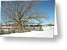 Winter Tree And Fence Greeting Card