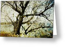 Winter Tree At The  Lake Shore  Greeting Card by Ann Powell