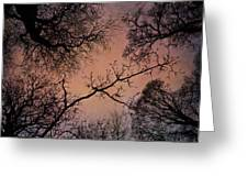 Winter Tree Canopy Greeting Card
