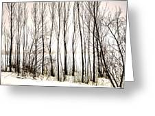 Winter Tree Fence 13283 Greeting Card