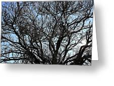 Winter Tree Hill End Nsw Greeting Card