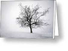 Winter Tree In Fog Greeting Card by Elena Elisseeva