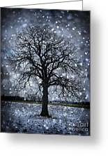 Winter Tree In Snowfall Greeting Card