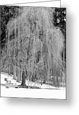 Winter Tree In Spokane - Black And White Greeting Card
