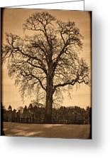 Winter Tree - Old Greeting Card