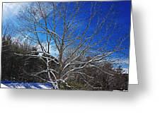 Winter Tree On Sky Greeting Card