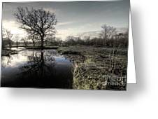 Winter Tree On The River Culm Greeting Card